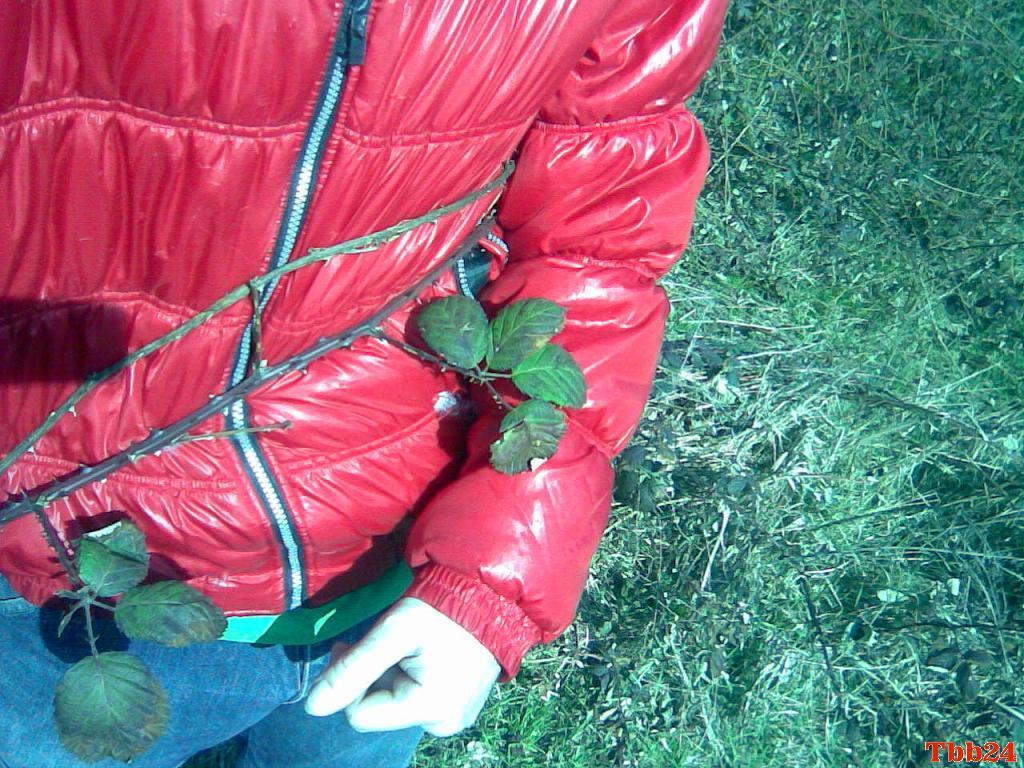 imagehosting.tbb24.com/bild.php/1166,33QYVN2.jpg